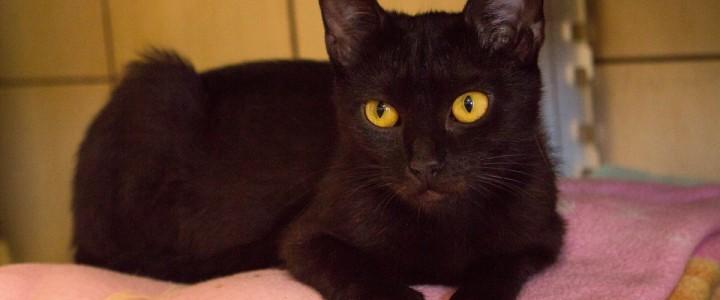Perła – kot do adopcji