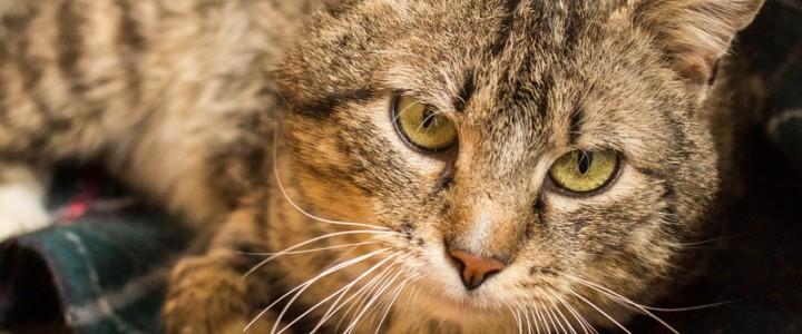 Kusy – kot do adopcji