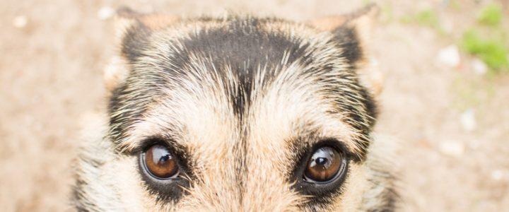 Łatka – pies do adopcji
