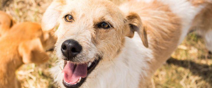 Pipi – pies do adopcji