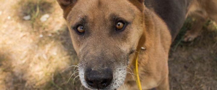 Skubi – pies do adopcji