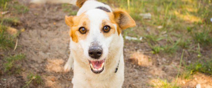 Spot – pies do adopcji