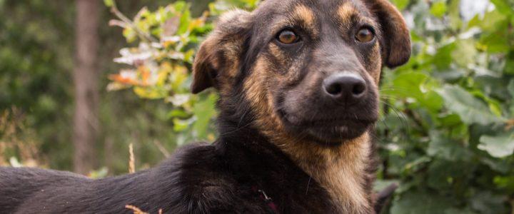 Elwira – pies do adopcji