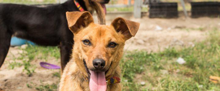 Sulfi – pies do adopcji