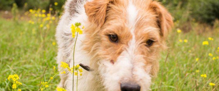 Maks – pies do adopcji