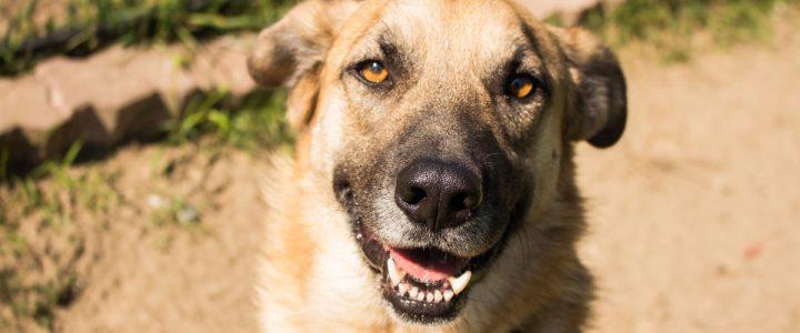 Miki – pies do adopcji