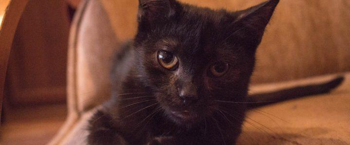 Kazik – kot do adopcji
