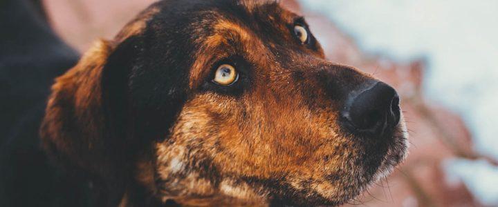 Bryś – pies do adopcji