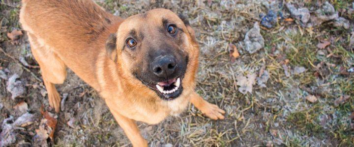 Czester – pies do adopcji
