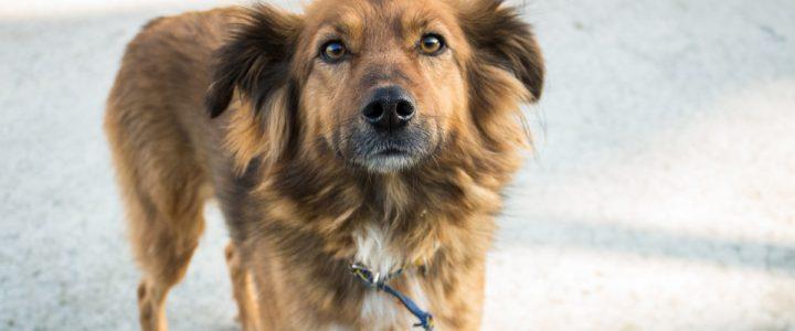 Alicja – pies do adopcji