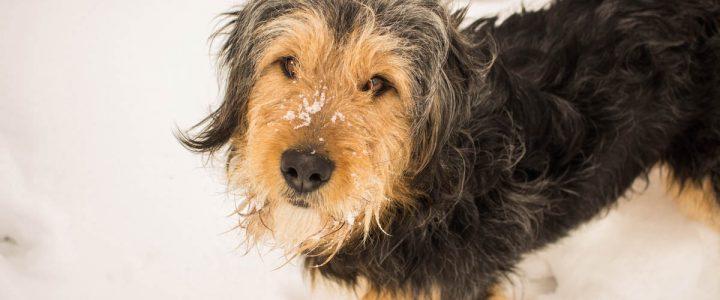 Polar – pies do adopcji