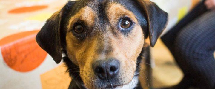 Staś – pies do adopcji
