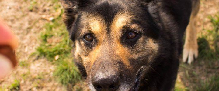Dyzio – pies do adopcji