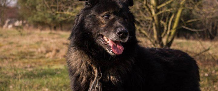 Kudłaty – pies do adopcji