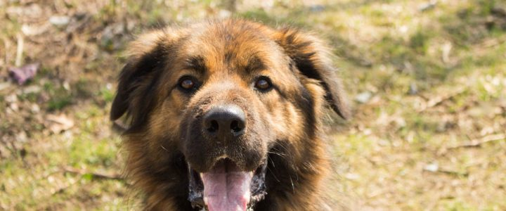 Leon – pies do adopcji
