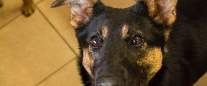 Zaza – pies do adopcji