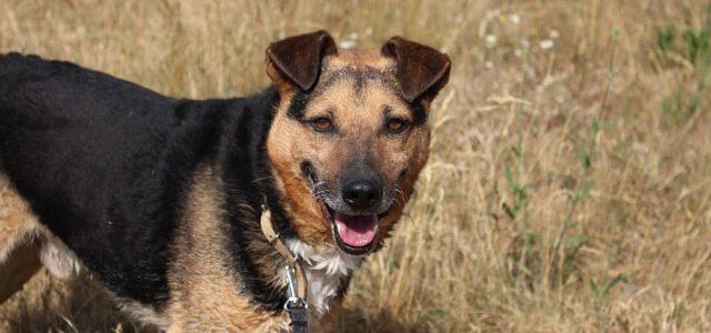 Michaś – pies do adopcji