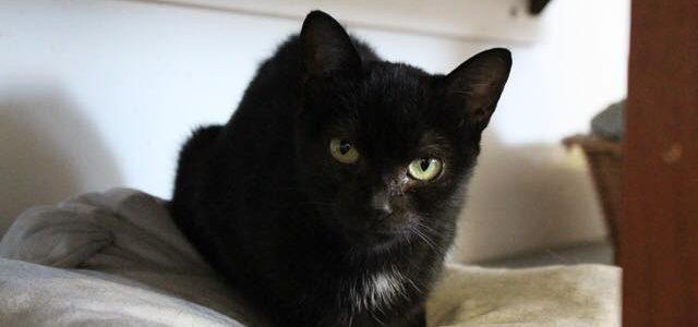 Bunia- kotka do adopcji