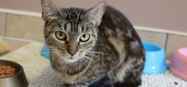 Felicja- kotka do adopcji