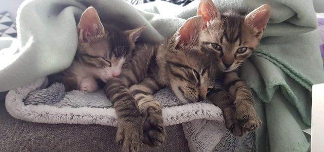 Kaktus, Dyziek i Halinka- koty do adopcji