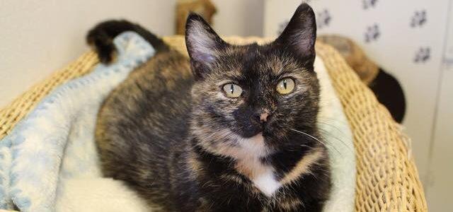 Lusia- kotka do adopcji