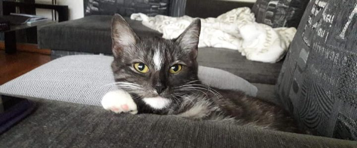 Azalia- kotka do adopcji