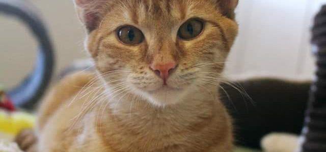 Ingrid- kotka do adopcji