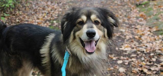 Filip- pies do adopcji