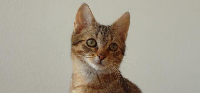 Pat- kot do adopcji