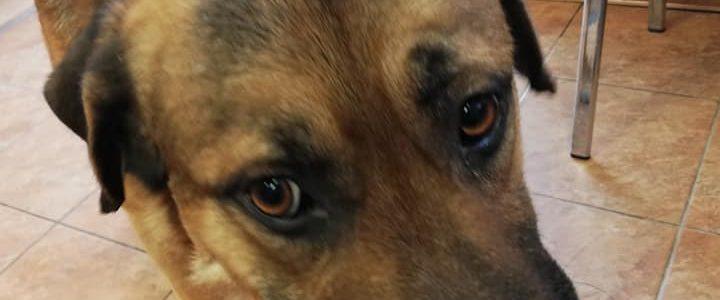 Znaleziono psa- Nowy Pożóg