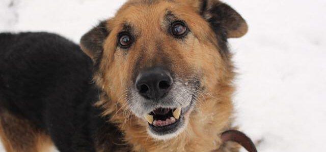 Bary- pies do adopcji
