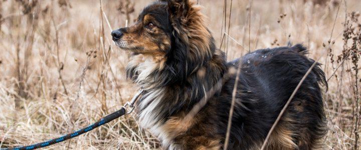 Kabaczek- pies do adopcji