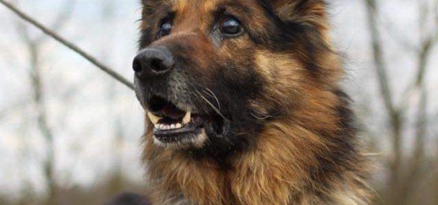Cywil- pies do adopcji