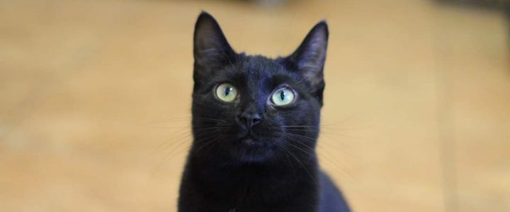 Mifi- kotka do adopcji