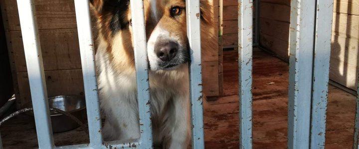Znaleziono psa, Puławy