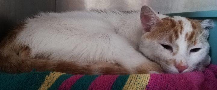 Znaleziono kota- Puławy
