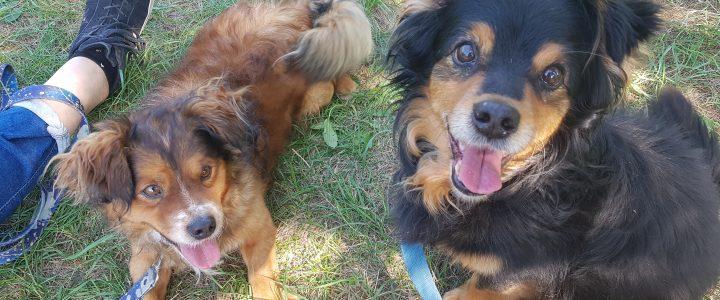 Misiek i Rex- psy do adopcji