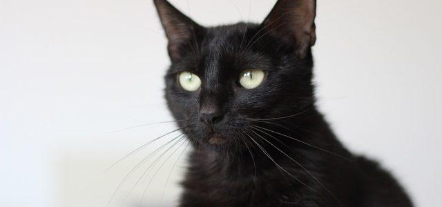 Frotka- kotka do adopcji