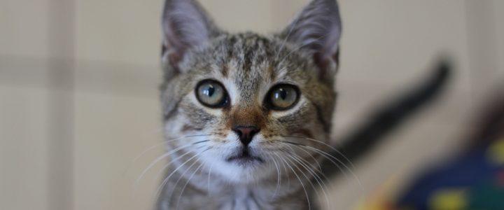 Gruszka- kotka do adopcji