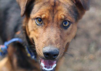 Trampek- pies do adopcji