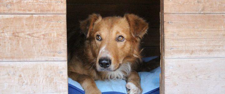 Znaleziono psa- Bronowice