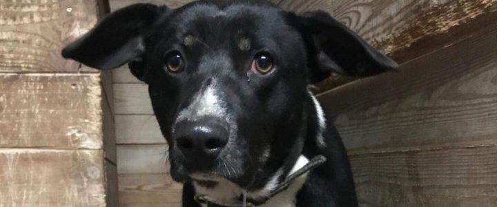 Znaleziono psa- Strzelce gm. Nałęczów