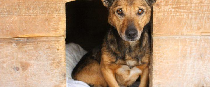 Znaleziono psa- Florianów
