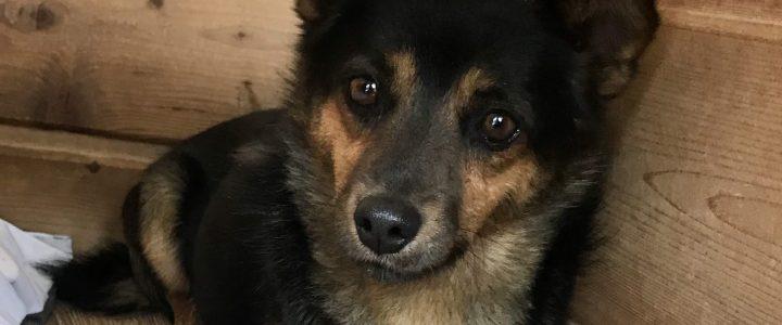 Kokos- pies do adopcji