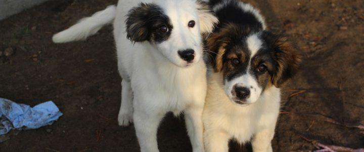 Martin i Malaga- adoptowane
