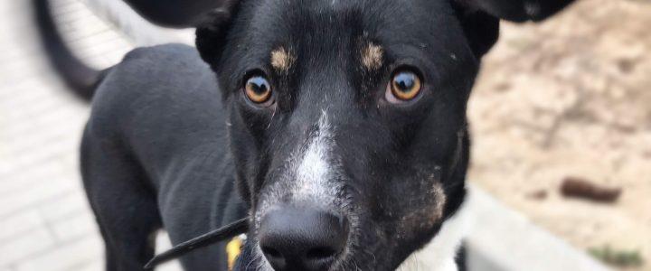 Freddie- pies do adopcji