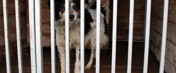 Znaleziono psa- Klikawa gmina Puławy