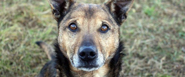 Tito- pies do adopcji
