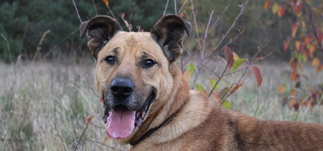 Jukatan- pies do adopcji