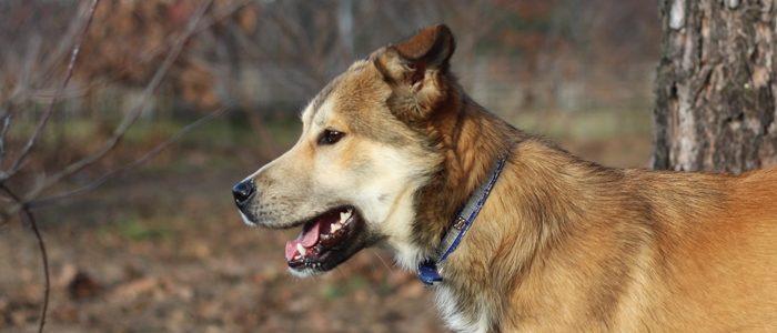Borys- pies do adopcji